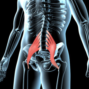 Your Psoas Muscle Is Key to Maintaining Good Alignment and Fighting Back Pain